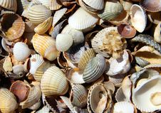 Free Mollusc Royalty Free Stock Images - 5930559