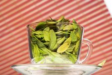 Free Cup Full Of Leaves On Striped Background Royalty Free Stock Photos - 5931698