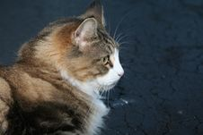 Free Cat Grooming Itself Stock Photography - 5931722