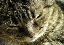 Free Tired Kitty Stock Photography - 5931932