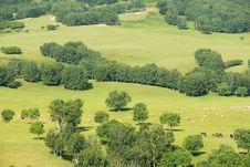Free Pasture Stock Image - 5933511