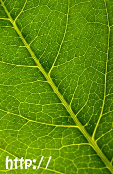 Free Http://leaf Stock Images - 5934904