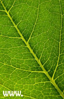 Free Www.leaf Stock Photos - 5934913