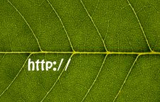 Free Http:// Leaf Texture Stock Photos - 5935033
