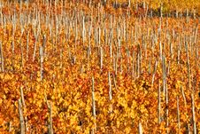 Free Vineyards Stock Photography - 5935312