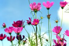 Free Summer Flowers Royalty Free Stock Image - 5936026