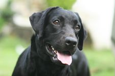 Free Black Dog Stock Image - 5936211