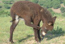 Free Donkey Stock Image - 5936621