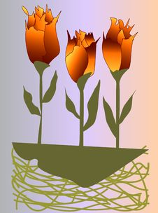 Free Unusual Colored Tulips Or Roses Royalty Free Stock Photo - 5936775
