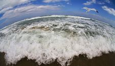 Free Flight Of The Seagull Above The Gale Sea. Royalty Free Stock Photos - 5936788