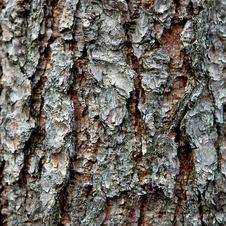 Free Pine Bark Stock Photos - 5936973