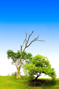 Free Tree With Blue Sky Stock Images - 5937034