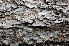 Free Pine Bark Stock Photography - 5937142