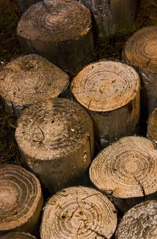 Free Logs Royalty Free Stock Image - 5937296
