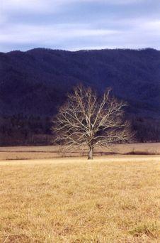 Free Tree Royalty Free Stock Photo - 5938145