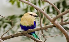 Free Colorful Bird Royalty Free Stock Photo - 5939035
