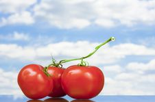 Free Three Tomatoes Royalty Free Stock Images - 5939069