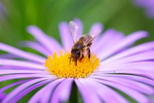 Free Flower And Bee Royalty Free Stock Image - 5939806