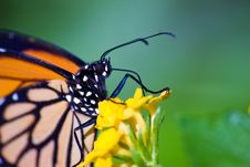 Free Butterfly Stock Photo - 5939920