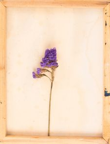 Free Vintage Image Of Dried Flowers Royalty Free Stock Photography - 59324357