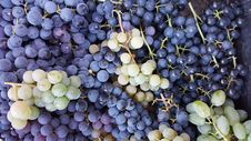 Free Grapes Royalty Free Stock Photography - 59336477