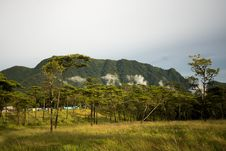 Photo Of Meadow And Pine Forest Stock Photography