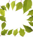 Free Frame With Green Leaves Royalty Free Stock Images - 5941299