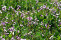 Free Flower Field Stock Photo - 5949100