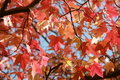 Free Beautiful Autumn Tree Royalty Free Stock Images - 5949929