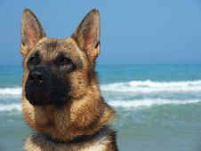 Dog In The Sea Stock Images