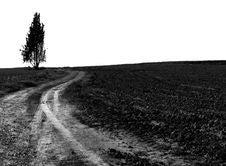Free Lonely Tree Stock Image - 5941711
