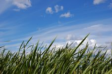 Free Sky And Grass Royalty Free Stock Image - 5943336