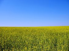 Free Meadow Stock Images - 5943344