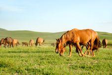 Free Horses Stock Photos - 5946003