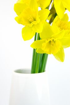 Free Daffodils Stock Photos - 5946103