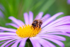 Free Bee Royalty Free Stock Images - 5946119
