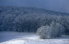 Free Winter Forest Stock Photo - 5947170