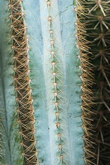 Free Details Of Cacti Stock Photography - 5947522