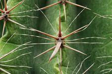 Free Cactus Needle Royalty Free Stock Photos - 5947568