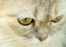 Free Cat Royalty Free Stock Photo - 5947625