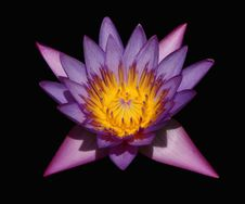 Free Waterlily In The Dark Stock Images - 5949344