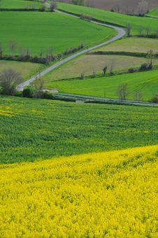 Free Rape Fields Royalty Free Stock Image - 5949666