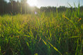 Free Grass Sunny Day Stock Photo - 59441050