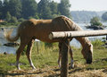 Free Horse Royalty Free Stock Photo - 5952005