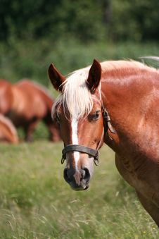 Free Portrait Of A  Horse Royalty Free Stock Image - 5950876
