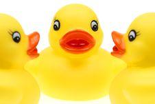 Free Small Yellow Plastic Ducks Stock Photos - 5951433