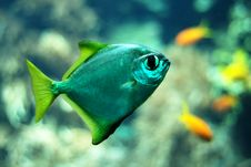 Free Blue Fish Stock Images - 5951474