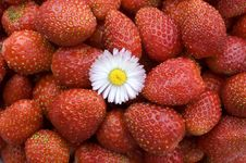 Free Strawberry. Stock Photography - 5951832