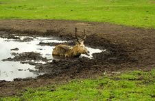 Free Deer Stock Image - 5951921