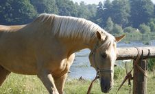 Free Horse Royalty Free Stock Photography - 5952047